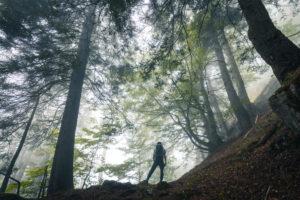 young hiker explores a beech forest on a gloomy day, san lucano valley, taibon agordino, belluno, veneto, italy
