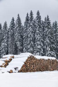 tree trunks stacked and ready for the sawmill, winter landscape, Paneveggio, Dolomites, Predazzo, Trentino, Italy
