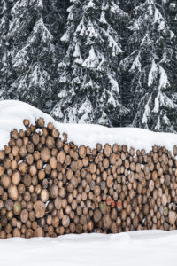 tree trunks stacked and ready for the sawmill, winter landscape, Paneveggio, Dolomites, Predazzo, Trentino, Italy