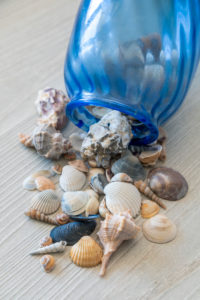 Seashells Collection, souvenirs from summer holidays