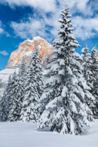 glimpse of the Tofana di Rozes among the snowy trees after a snowfall, Dolomites, Cortina d'Ampezzo, Belluno, Veneto, Italy