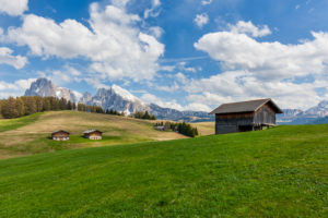 Alpe di Siusi - Seiser Alm, Characteristic mountain barns with Sassolungo / Langkofel and the Sassopiatto / Plattkofel in the background, Dolomites, Kastelruth, South Tyrol, Italy