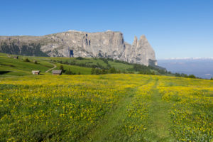 Mountain Sciliar (Schlern), Alpe di siusi (Seiser Alm), Castelrotto (Kastelruth), Dolomites, South Tyrol, Italy