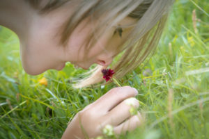 10 year old girl sniffs the scent of wild orchid Black Vanilla Orchid (Nigritella nigra) in a meadow in the Dolomites