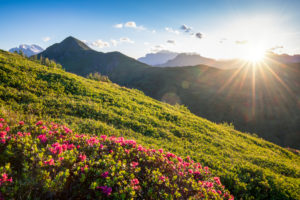 flowery hills near the Giau pass at sunset, Dolomites, Colle Santa Lucia, Belluno, Veneto, Italy