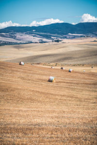 summer scenery with hay in bales in the hills of Castiglione d'Orcia, province of Siena, Tuscany, Italy