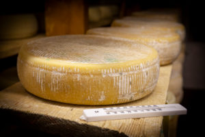 Italy, Veneto, Belluno, Seren del Grappa, typical cheeses (Morlacco and Bastardo del Grappa) in the cellar for aging