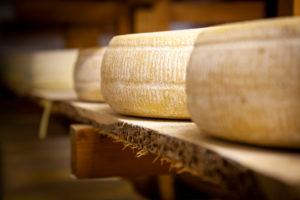 Italy, Veneto, Belluno, Seren del Grappa, typical cheeses (Morlacco and Bastardo del Grappa) in the cellar for aging