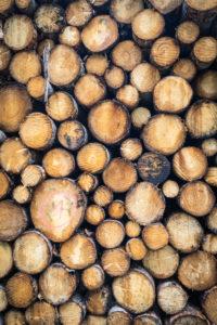 Italy, Veneto, Belluno, Agordino, pile of lumber in the woods, rough lumber