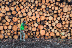 Italy, Veneto, Belluno, Agordino, one man (45 to 50 years) in the woods near a pile of logs, rough timber