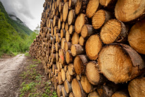 Italy, Veneto, Belluno, Agordino, pile of lumber in the woods, rough lumber