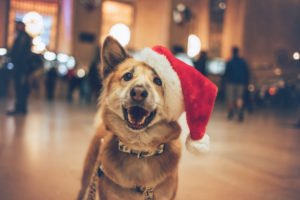 blonde dog in grand central with a Christmas hat