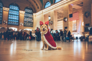 blonde dog in grand central with a deer hat and a cape
