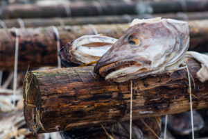 Europe, Norway, Lofoten, Stockfish, Dried fish, close-up