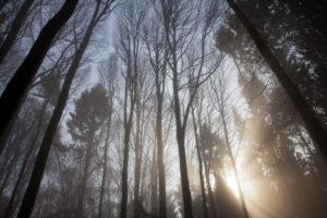 Deutschland, Blick nach oben in Baumkronen, Winter, Bäume ohne Laub