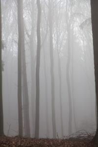 Deutschland, Wald im Morgennebel
