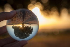 Deutschland, Bayern, freistehender Baum im Abendlicht spiegelt sich kopfstehend in Glaskugel