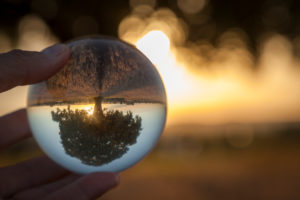 Germany, Bavaria, solitary tree in the evening light reflected upside down in glass ball