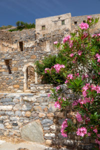 zerfallene Häuser mit rosa Oleander auf der Leprainsel Spinalonga, Griechenland, Kreta, Kalydon