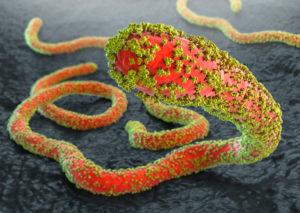 Ebola-Viren mit Glykoproteinen auf grauem Gewebeuntergrund