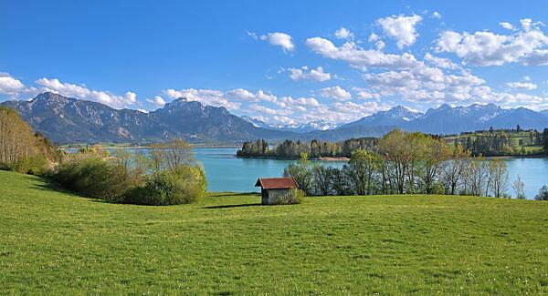 Spring landscape at Forggensee against Tegelberg (1881m) and Säuling (2047m) of the Ammergau Alps, Halblech, Romantic Road, Ostallgäu, Allgäu, Swabia, Bavaria, Germany