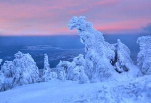 Winterlandschaft mit vereisten Bäumen am Brocken, Wernigerode, Naturpark Harz, Sachsen-Anhalt, Deutschland