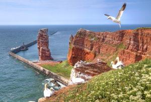 Seabirds, Gannets on the northwest cliff with surf rocks Lange Anna, Helgoland, Helgoland Bay, German Bight, North Sea Island, North Sea, Schleswig-Holstein, Germany