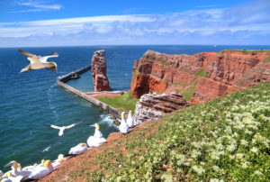 Northwest cliff with surf rocks. Long Anna and breeding seabirds. Gannets, Helgoland, Heligoland Bay, German Bight, North Sea Island, North Sea, Schleswig-Holstein, Germany