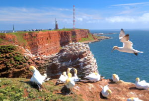 Northwest cliff with breeding seabirds, gannets, lighthouse and mast on the Oberland, Heligoland, Helgoland Bay, German Bight, North Sea island, North Sea, Schleswig-Holstein, Germany
