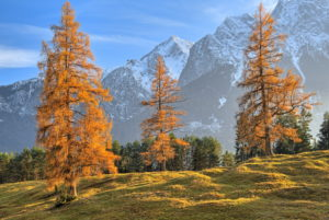 Autumn landscape at the Höhenrain path against Zugspitz mountains (2962m), Grainau, Wetterstein Mountains, Werdenfelser Land, Upper Bavaria, Bavaria, Germany
