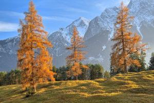 Herbstlandschaft am Höhenrainweg gegen Zugspitzgruppe ( 2962m ), Grainau, Wettersteingebirge, Werdenfelser Land, Oberbayern, Bayern, Deutschland