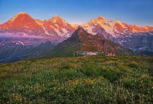 Bergwiese auf dem Männlichen mit Dreigestirn Eiger ( 3967m ), Mönch ( 4107m ) und Jungfrau-Massiv ( 4158m ) in der Abendsonne, Wengen, Jungfrau-Region, Berner Oberland, Kanton Bern, UNESCO-Weltnaturerbe, Schweiz
