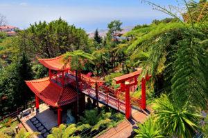Japanischer Garten mit Baumfarnen im Tropischen Park Monte Palace im Ortsteil Monte oberhalb der Stadt, Funchal, Insel Madeira, Portugal
