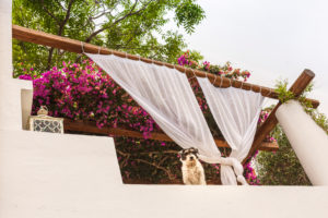 Sicily - Sunny impressions of the Aeolian Islands, also known as Aeolian Islands or Isole Eolie: Lipari, Stromboli, Salina, Vulcano, Panarea, Filicudi and Alicudi. Dog looks down from a roof terrace. Outside curtains as sun protection.