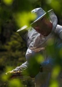 Eine Imkerei am Waldrand: Arbeitsalltag eines Imkers. Imker inspiziert die Wabe.