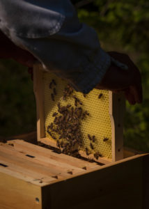 A beekeeping on the edge of the forest: everyday life of a beekeeper. Beekeepers inspect the honeycomb.