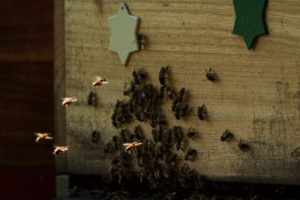 A beekeeping on the edge of the forest: everyday life of a beekeeper. Flying the bees to the beehive.