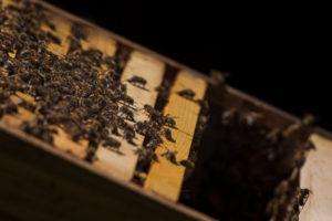 Eine Imkerei am Waldrand: Arbeitsalltag eines Imkers. Honigbienen im Bienenhaus.