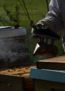 A beekeeping on the edge of the forest: everyday life of a beekeeper. The smoker is used to generate smoke in the apiary. The smoke calms the bees and makes the beekeeper's job easier.