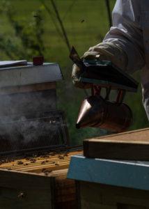 Eine Imkerei am Waldrand: Arbeitsalltag eines Imkers. Der Smoker dient der Raucherzeugung in der Imkerei dient. Der Rauch stellt die Bienen ruhig und erleichtert dem Imker die Arbeit.