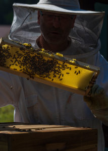 A beekeeping on the edge of the forest: everyday life of a beekeeper; Beekeepers inspect the honeycomb.