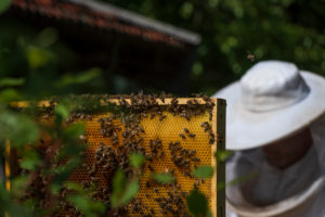 A beekeeping on the edge of the forest: everyday life of a beekeeper. Honeycomb; Beekeepers in the background.