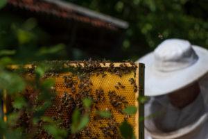 Eine Imkerei am Waldrand: Arbeitsalltag eines Imkers. Honigwabe; Imker im Hintergrund.