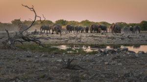 Elefanten in Etoscha an einem Wasserloch bei Sonnenuntergang