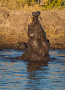 Elephant in the water in Etoscha, Namibia