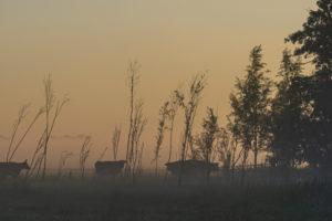 Ein Tag in Holland: Sonnenaufgang im Polder, Citywalk in Dordrecht.