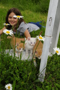 Girl plays with kittens on old white window on a meadow