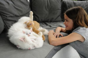 Girl kneels in front of nursing cat on grey sofa