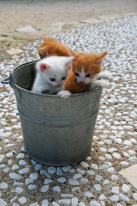 Three kittens in zinc bucket on terrace with white pebbles