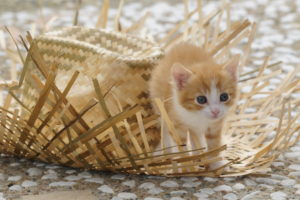 Red-white kitten with straw hat on terrace